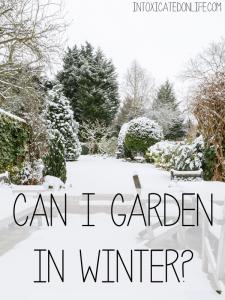 Can I Garden In Winter? | IntoxicatedOnLife.com