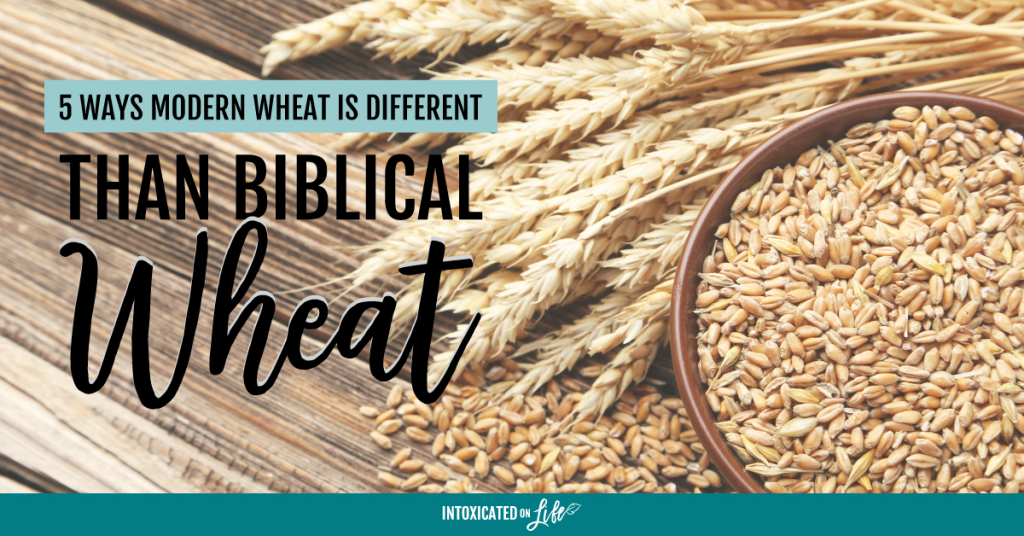 5 Ways Modern Wheat Is Different Than Biblical Wheat FB