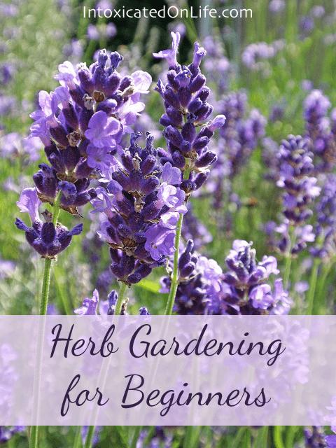 Herb gardening for beginners - Gardening for beginners ...