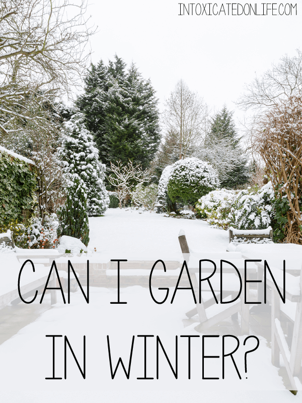 Can i garden in the winter - Gardening mistakes maintaining garden winter ...