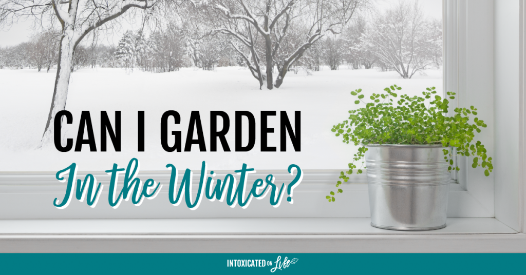 Can I Garden In The Winter FB
