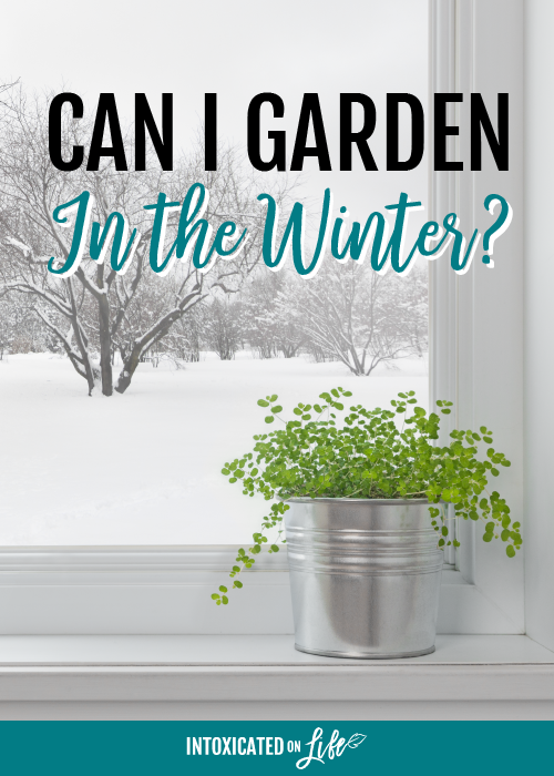 Can I Garden In The Winter
