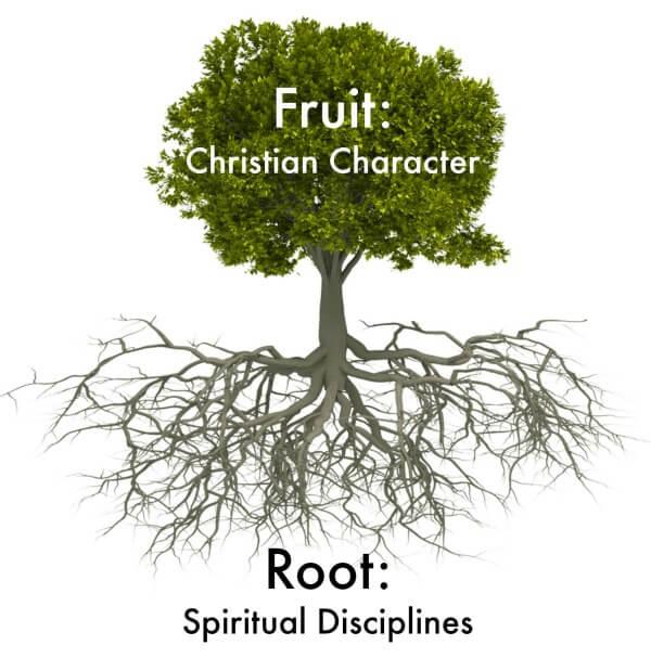 Spiritual Root System