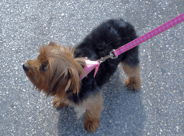 Things Your Kids Can Do to Make Money: Walking Dogs