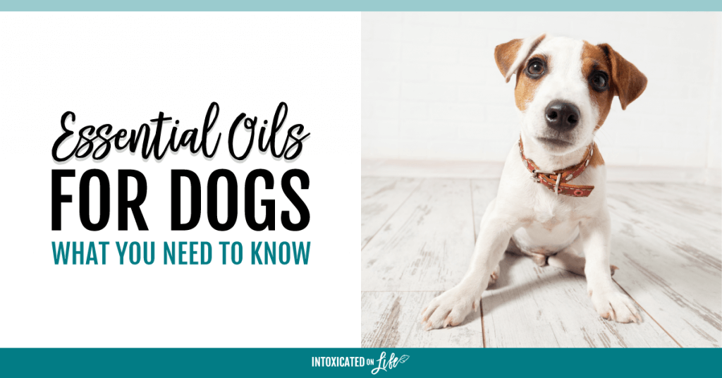 Essential Oils For Dogs What You Need To Know FB