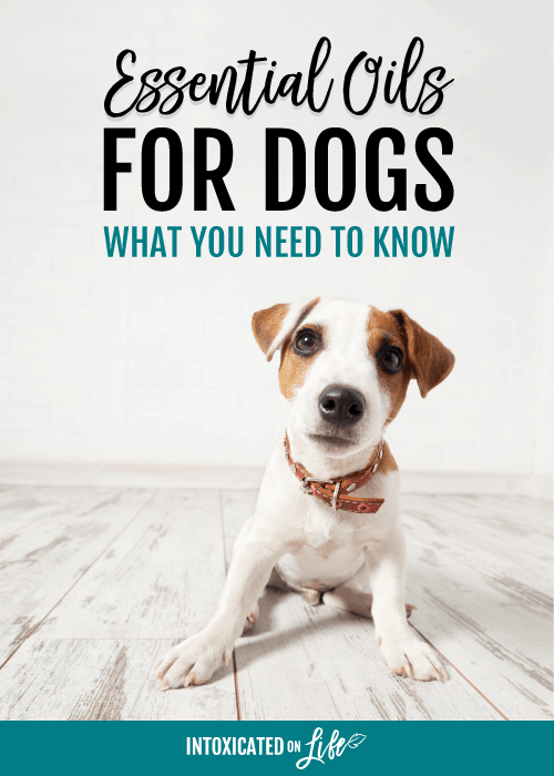 Essential Oils For Dogs What You Need To Know