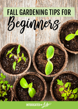 Fall Gardening Tips for Beginners