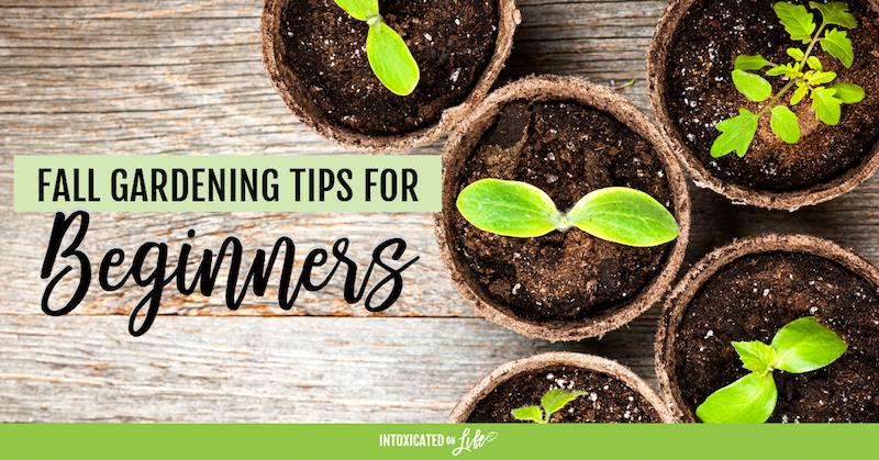 Fall Gardening Tips For Beginners