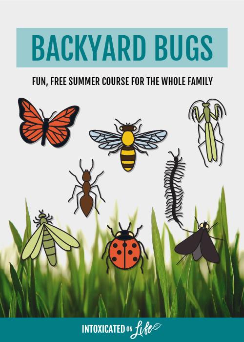 Backyard Bugs Course