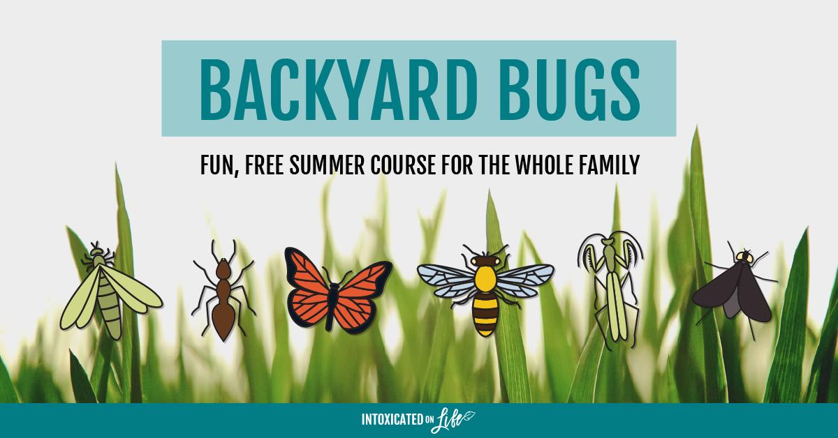 Backyard Bugs Summer Course